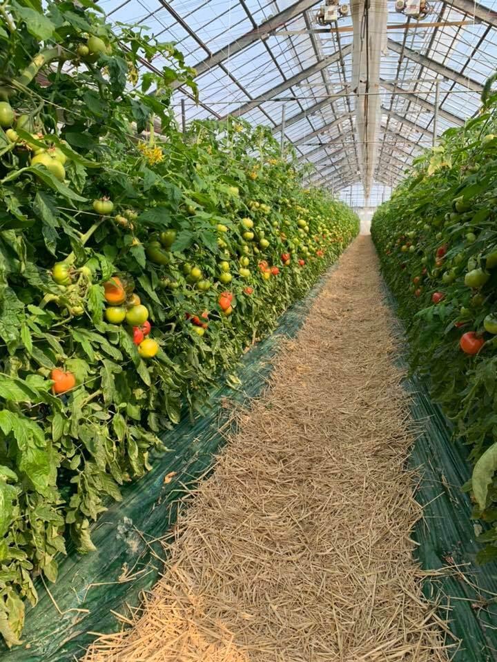 古賀とまと農園