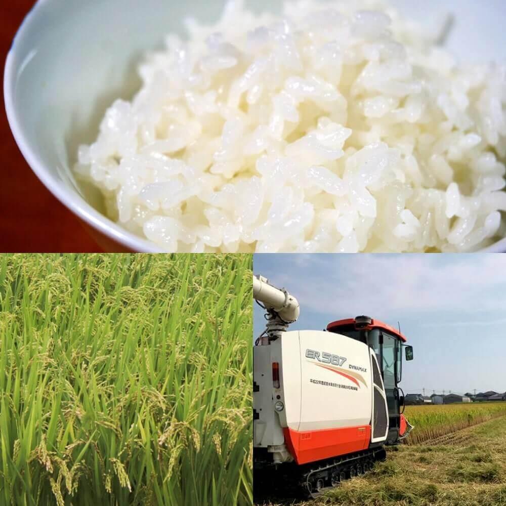 佐賀県から生まれた品種のお米「夢しずく