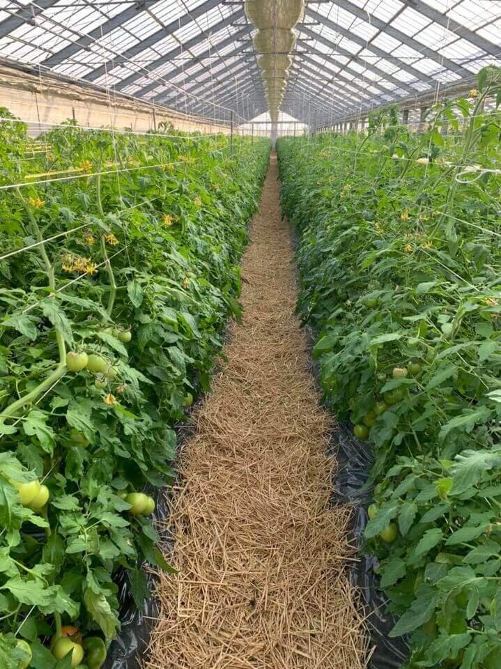 20210116 初収穫・初集荷